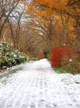 07.11.16.雪の散歩道1.JPG
