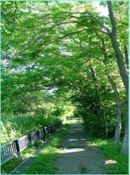 16.6.15.散歩道.JPG