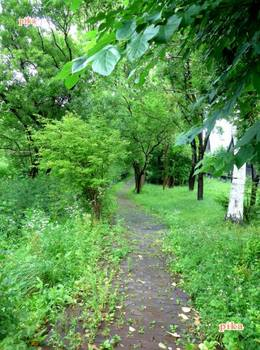 16.7.29.散歩道.JPG