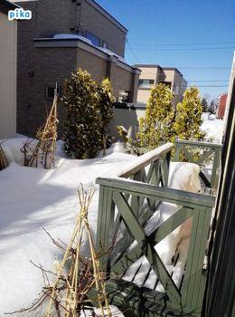18.3.21.手摺の雪.jpg