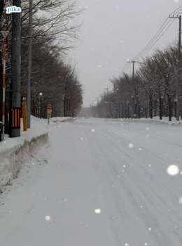 17.2.14.朝の雪1.JPG