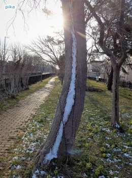 17.4.14.木に積もった雪.JPG