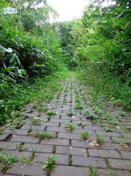 17.8.13.散歩道.JPG